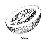 Hand Drawn of Chiverre on White Background. Exotic Fruit, Illustration Hand Drawn Sketch of Chiverre, Figleaf Gourd or Cucurbita Ficifolia Fruit Isolated on Stock Images