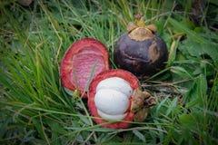 Exotic fruit mangosteen: whole and peeled royalty free stock photos