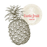 Exotic fruit pineapple. Stock Images
