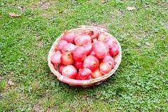Exotic Fruit Red Pomegranate Stock Photo