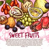 Exotic fruit or sweet tropical berry sketch poster. Exotic fruit and sweet tropical berry poster for menu cover template. Fresh quince, pomelo and santol, pepino vector illustration