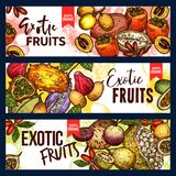 Exotic fruit and tropical berry sketch banner. Set. Fresh persimmon, kiwano and granadilla, jackfruit, akebia and miracle fruit, marula and cupuassu for exotic royalty free illustration