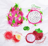 Exotic fruit watercolor dragon fruit, rambutan, Royalty Free Stock Image