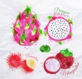Exotic fruit watercolor dragon fruit, rambutan, stock illustration