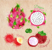 Exotic fruit watercolor dragon fruit, rambutan, Stock Photos