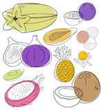 Exotic fruits. Vector exotic ftuits collection on a white background Stock Photos