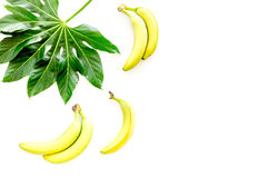 Exotic fruits. Fresh ripe bananas near big tropical leaf on white background top view copyspace Royalty Free Stock Photos
