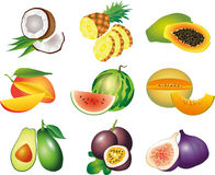 Exotic fruits photo-realistic set Stock Images