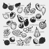 Exotic Fruits, Set Royalty Free Stock Photo