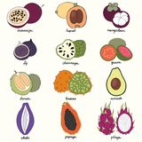 Exotic fruits. Set of vector illustrations Stock Image