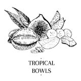 Exotic fruits. Vecotr hand drawn exotic fruits. Engraved smoothie bowl ingredients. Tropical sweet food. Carambola, fig, mango, pitaya, banana, coconut. Use for Royalty Free Stock Image