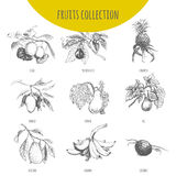 Exotic fruits vector botanical illustration sketch set Royalty Free Stock Photo