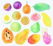 Exotic fruits - watercolor illustration Stock Photo