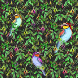 Exotic fuchsia flowers and tropical birds on black background. Seamless floral pattern. Watercolor Royalty Free Stock Photography