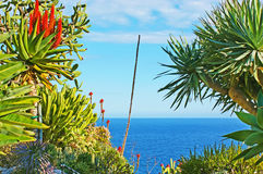 Exotic Garden of Monaco Stock Image