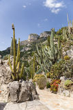 The Exotic Garden of Monaco Royalty Free Stock Photography