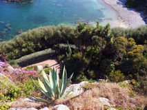 Exotic garden near roscoff in brittany. Stock Photography