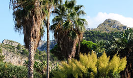 Exotic garden, with palm trees Royalty Free Stock Photo