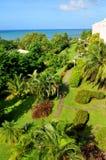 Exotic garden stock image