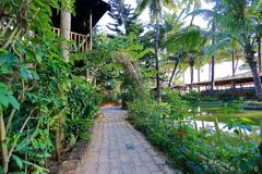 Exotic garden in tropic place. Exotic garden in tropic place in India royalty free stock photo