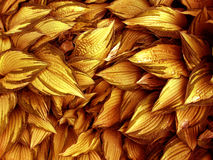 Exotic Gold Leaves Royalty Free Stock Image