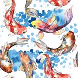 Exotic goldfish wild fish pattern in a watercolor style. Royalty Free Stock Photography