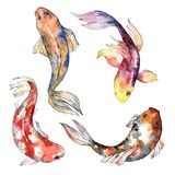 Exotic goldfish wild fish in a watercolor style isolated. Stock Photos