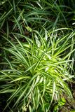 Tropical plants, exotic grass in the sunshine. Exotic grass, close up shot, beautiful tropical plants Stock Images