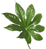 Exotic green leaf Stock Image