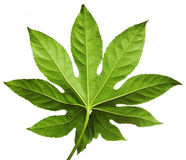 Exotic green leaf Stock Photo
