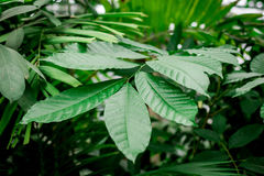 Exotic green plant leaves closeup in greenhouse. Space Stock Photo