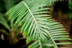 Exotic green plant leaves closeup in greenhouse. Space Royalty Free Stock Photography