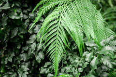 Exotic green plant leaves closeup in greenhouse. Space Stock Photos