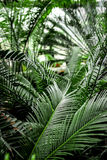 Exotic green plant leaves closeup in greenhouse. Space Stock Image