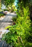 Exotic, green plants, natural background. Exotic, beautiful, green plants, natural background Royalty Free Stock Image