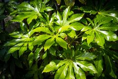 Exotic, green plants, natural background. Exotic, green leaves plants, natural background Stock Photo