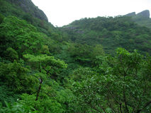 Exotic Green Scenery. Mountain Covered with Green Trees Stock Image