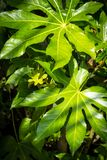 Exotic, green plants, natural background. Exotic, green, shiny plants, natural background Royalty Free Stock Photo