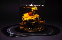 Exotic green tea with flowers in a glass teapot royalty free stock images