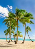 Exotic high palm trees, wild beach azure waters, Caribbean Sea, Dominican. Exotic high palm trees on a wild beach against the azure waters of the Caribbean Sea stock photography