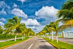 Exotic highway road with green palm trees in sunny windy weather Royalty Free Stock Photo