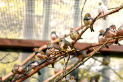 Exotic image of a flock of small birds in the aviary beautiful Stock Photo