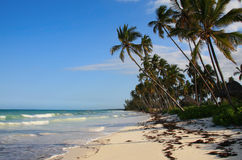 Exotic island beach. Exotic beach of tropical island. Ocean breakers, wave swash on sandy beach with coconut palms. Zanzibar Island, Tanzania Stock Images