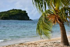 Exotic island with white sandy tropical beach and palm tree. On sunny day Royalty Free Stock Photography