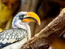 Exotic Jungle Bird. With Yellow Beak On Branch stock images