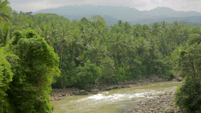 Exotic jungle with palm trees and river in indonesia Stock Photos