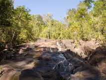 Exotic Jungle - Thailand Stock Photo