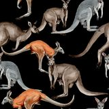 Exotic kangaroo wild animal pattern in a watercolor style. Royalty Free Stock Image