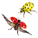 Exotic ladybug wild insect in a vector style isolated. Royalty Free Stock Photography