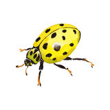 Exotic ladybug wild insect in a vector style isolated. Royalty Free Stock Photo